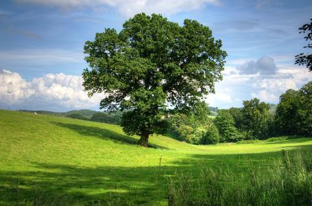 treebase.png
